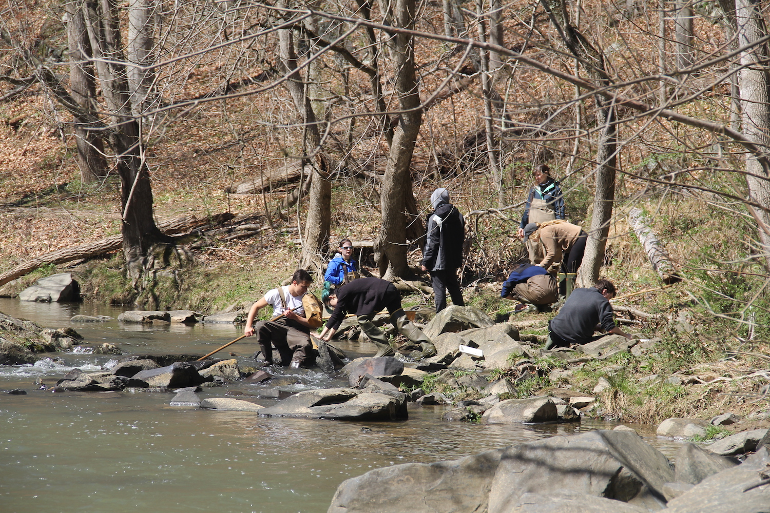 University Honors students collecting samples near a stream